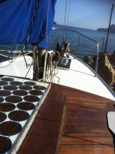 IMG_0921 (Compass Rose wieder im Wasser!)